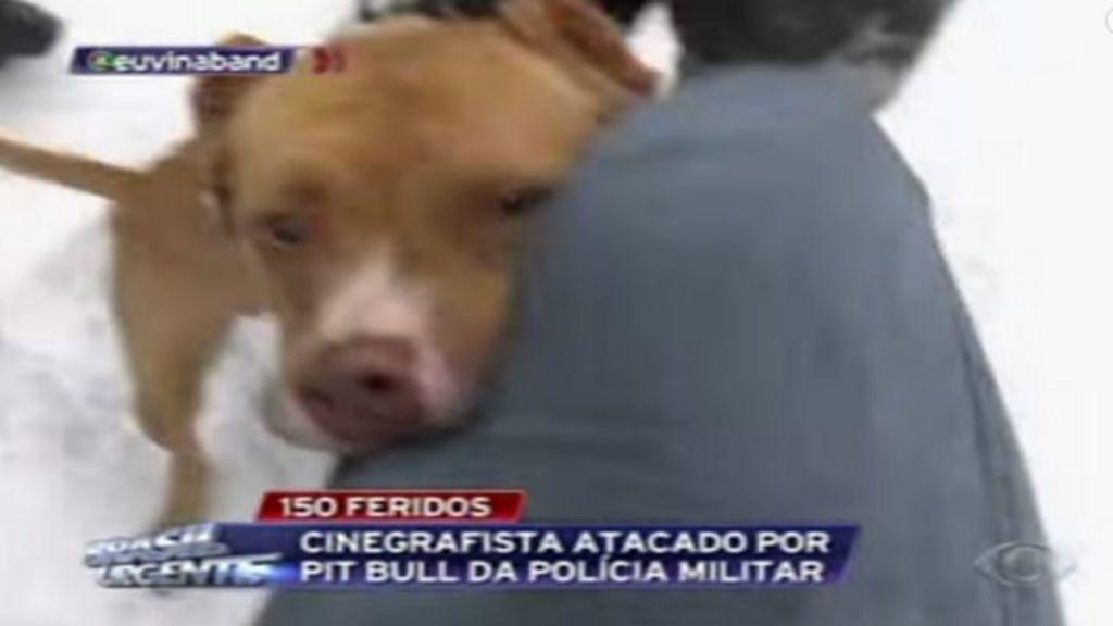 Uso de pitbulls por PM do Paraná é considerado 'inadequado' por ...