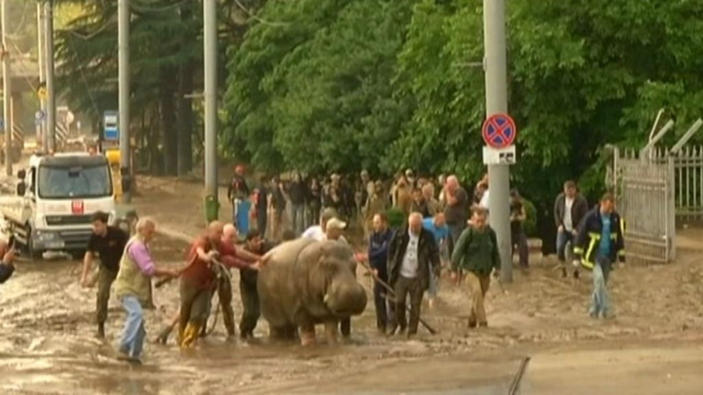 Enchente causa tragédia na Geórgia, e animais de zoo ficam à solta ...