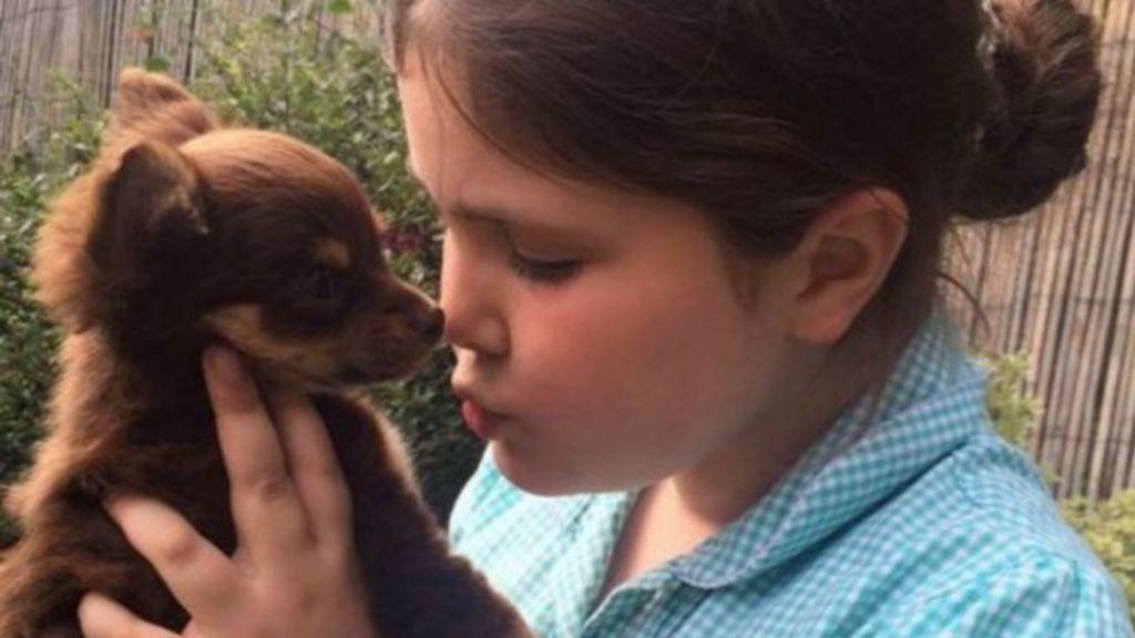 Cachorrinha roubada é devolvida aos donos após busca viralizar ...