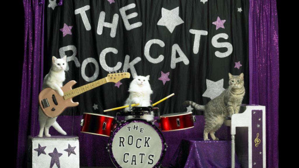 Gatos acrobatas conquistam fãs em turnê de ônibus pelos EUA ...