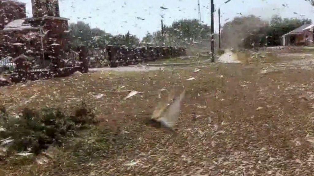 Invasão de gafanhotos destrói 7 mil 'Maracanãs' na Rússia - BBC ...
