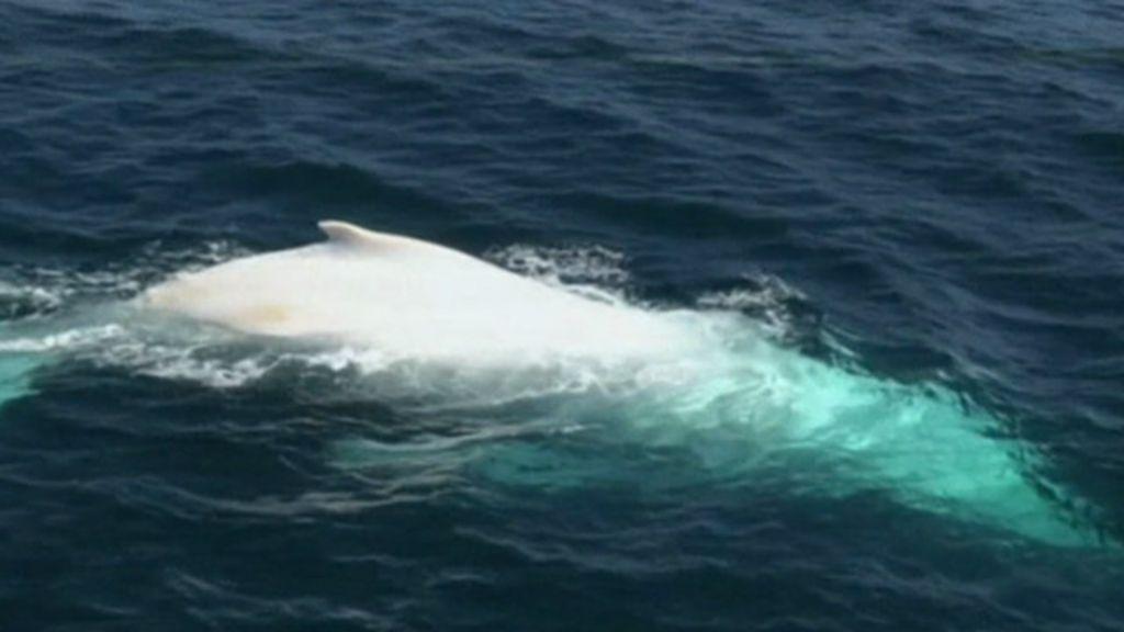 Ensayo Moby Dick - Trabajos - ClubEnsayoscom