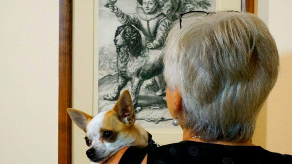 Museu de Berlim abre exposição 'boa para cachorro' - BBC Brasil