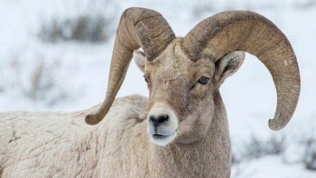 Irã se torna destino popular entre caçadores americanos - BBC Brasil