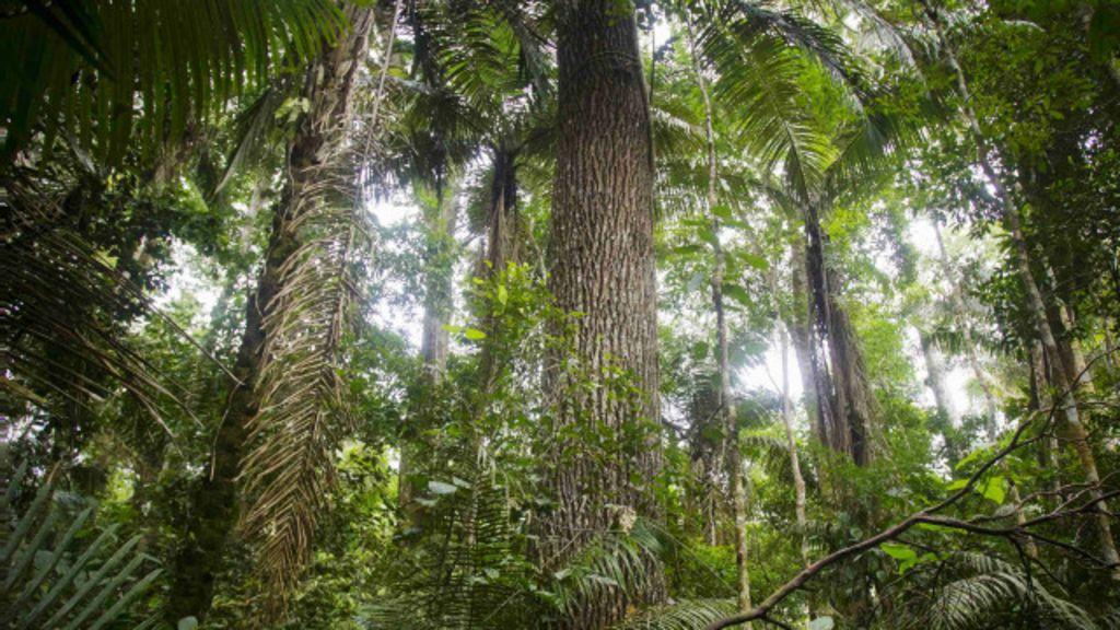 Mundo tem três trilhões de árvores e perde 10 bilhões por ano, diz ...
