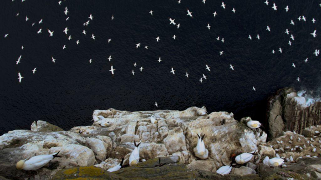 ' Chuva' de pássaros em penhasco vence prêmio de fotografia na ...
