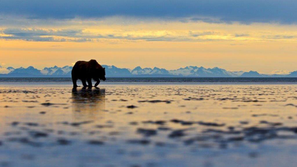 Silhueta de urso-cinzento em montanhas vence prêmio de fotografia ...