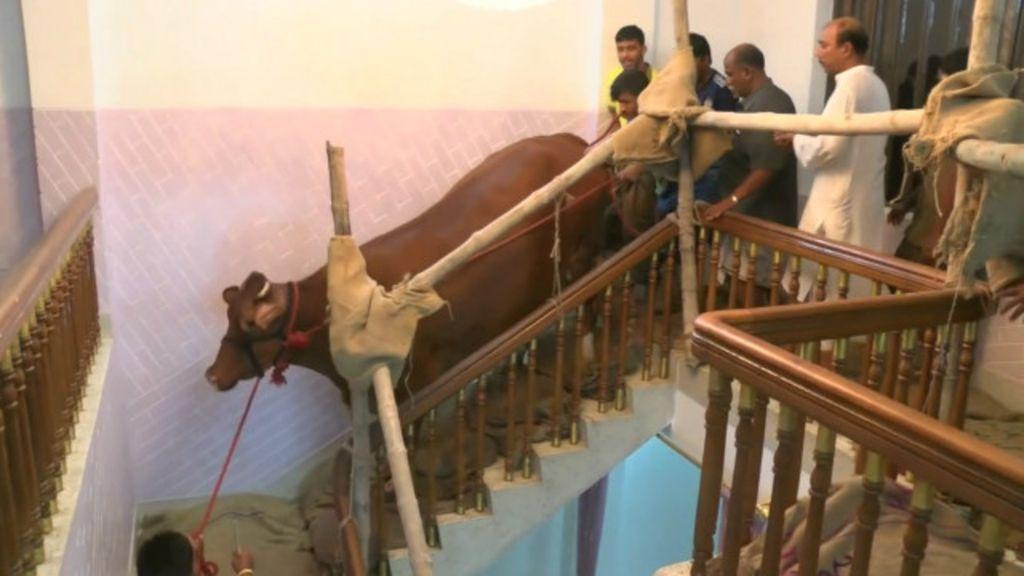 'Fazendeiro' cria gado no alto de prédio em Bangladesh - BBC Brasil