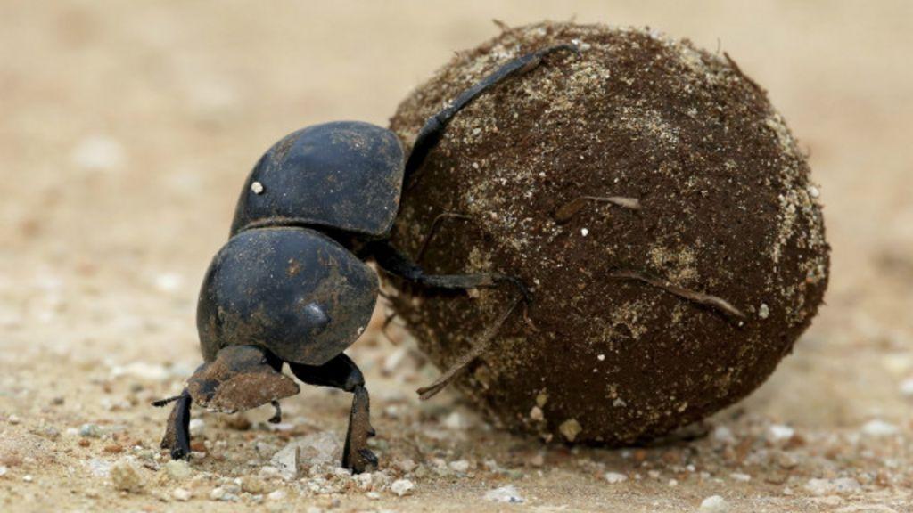 A semente que se disfarça de fezes para garantir sobrevivência da ...