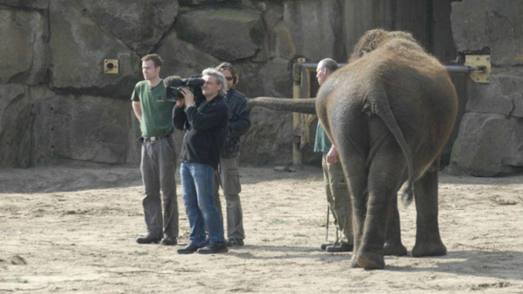 Reality shows estrelados por animais 'revelam celebridades' como ...