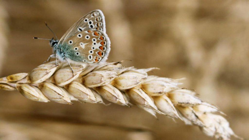 A beleza dos seres minúsculos em 13 fotos - BBC Brasil