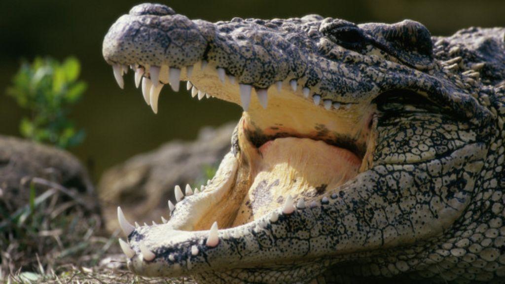 Indonésia planeja usar crocodilos para vigiar traficantes ...