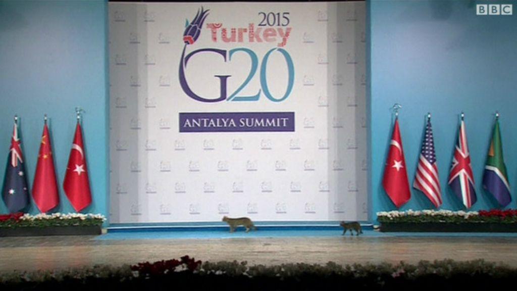 Gatos 'invadem' reunião do G20 na Turquia - BBC Brasil