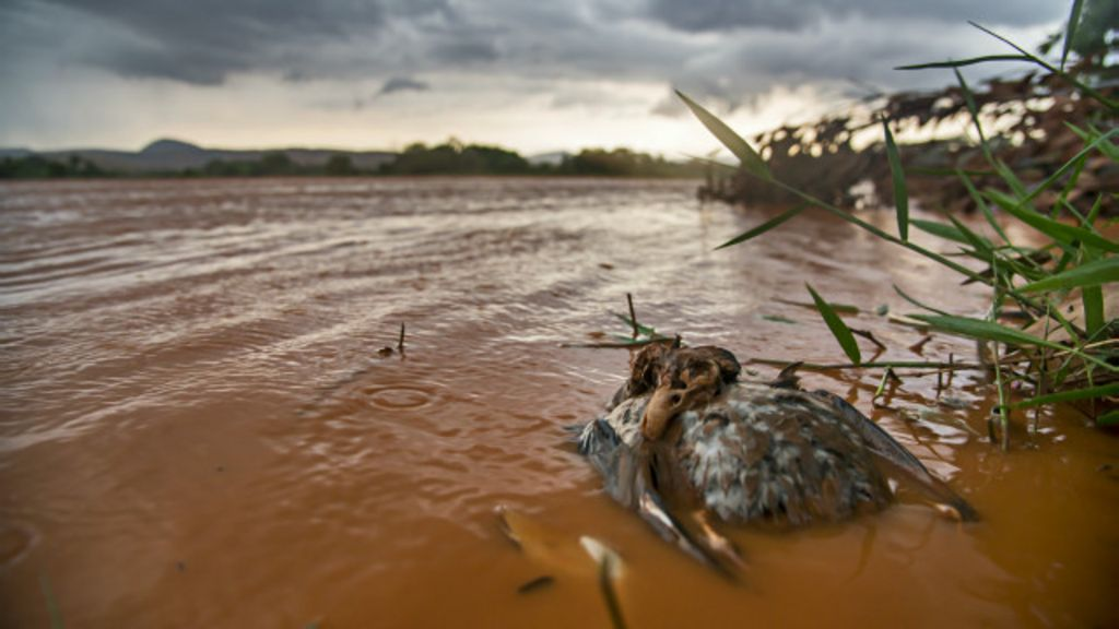 Lama, lágrimas e morte: a jornada de fotógrafo no rio Doce - BBC ...
