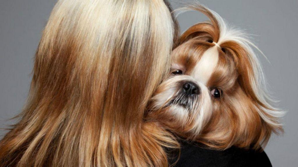 Por que cães se parecem com seus donos? - BBC Brasil