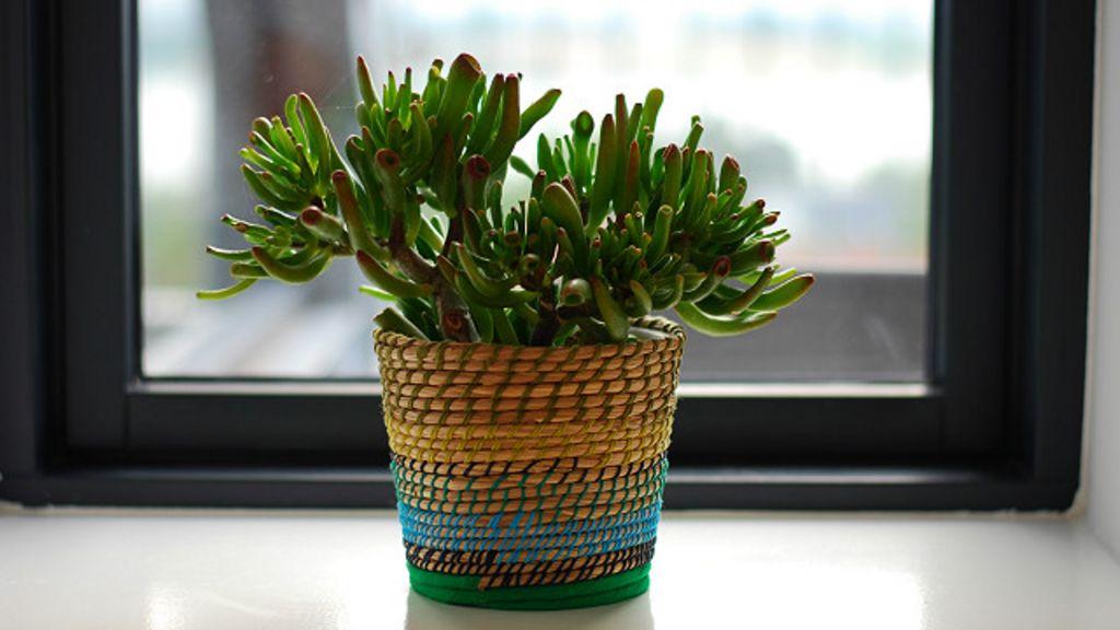 5 plantas que la nasa recomienda para purificar el aire de for Cuales son las plantas para interiores
