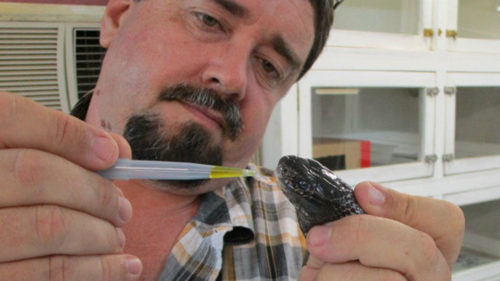 Após sobreviver a 6 picadas de cobra, cientista promete antídoto ...