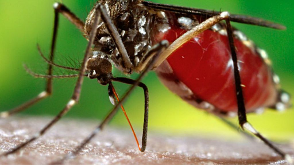'Verão do Aedes' ameaça saúde pública, alertam especialistas ...