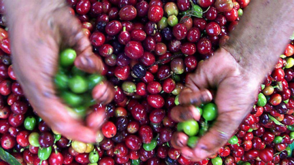 Como as mudanças no planeta afetarão a nossa alimentação ...