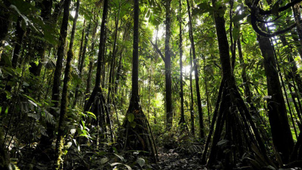 A floresta cujas árvores podem 'andar' até 20 metros por ano - BBC ...