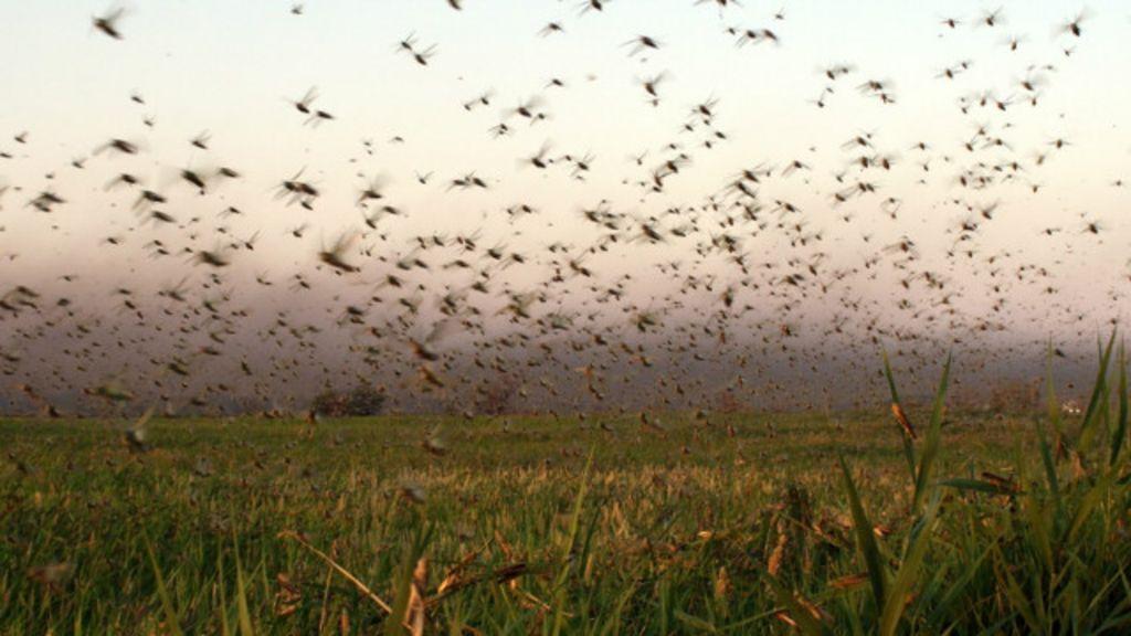 Mudança climática provoca ataques de gafanhotos na Argentina ...