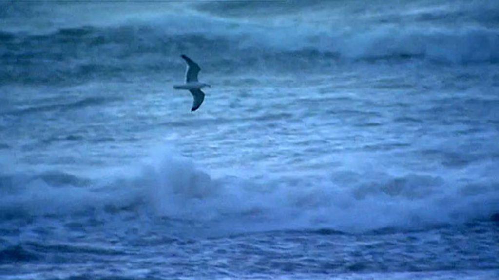 Vídeo capta momento em que gaivota é levada por tempestade ...