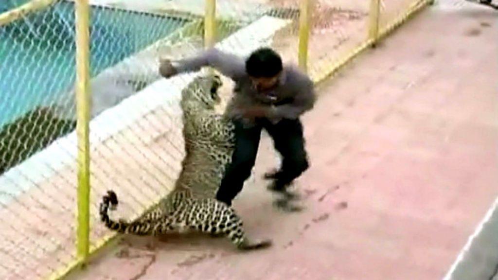 Leopardo invade escola e fere seis pessoas na Índia - BBC Brasil