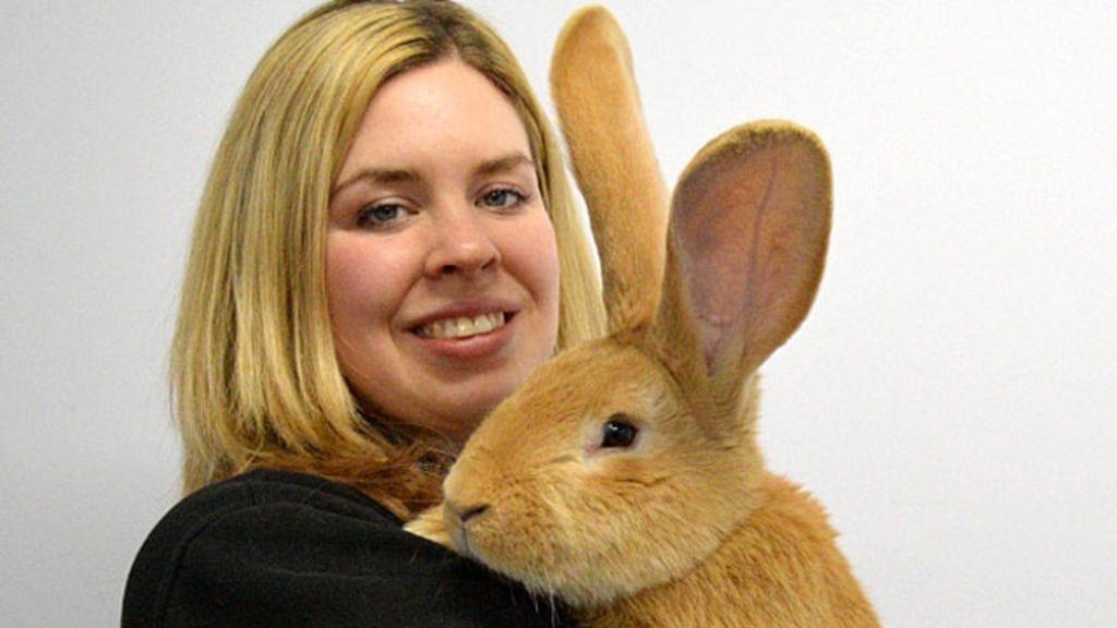 Abandonado pelo dono, coelho gigante busca novo lar na Escócia ...