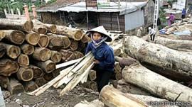 Khai thác gỗ ở Việt Nam