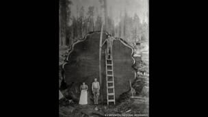 A National Geographic celebra 125 anos com um leilão online de 125 fotografias vintage e contemporâneas