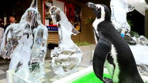 अफ़्रीका पेंग्विन, टोक्यो, जापान, गर्मी, पिक्चर गैलरी