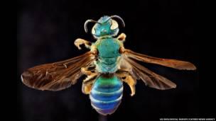 Mundo tem estimadas 20 mil espécies do inseto; laboratório americano monitora várias delas desde 2004.
