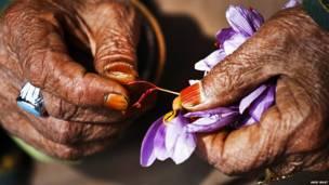 Manos con flor de azafrán