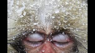 Foto de un macaco ´japonés con gotas de agua