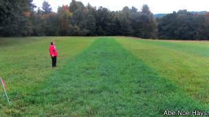 Prueba de uso de orina como fertilizante