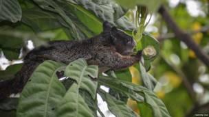 Floresta de Cerro Blanco, onde espécies foram fotografadas, fica perto de uma das maiores cidades do país, Guayaquil
