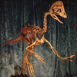 डायनासोर की नई प्रजाति