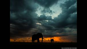 Elefantes en la lluvia al anochecer. Paul Goldstein / Rex Features