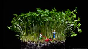 """Tending to the garden"", de David Gilliver/Barcroft Media"