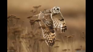 Prêmio Wildlife cria categoria para participação popular; confira algumas das fotos finalistas.