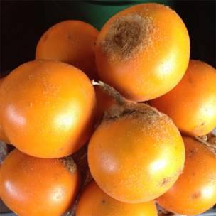 Lulo (Solanum quitoense).