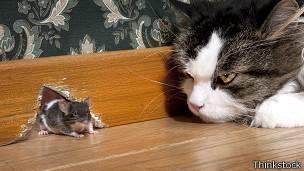 Mundo loco julio 2015 - Como cazar un raton en un piso ...
