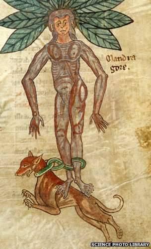 Ilustración de De Materia Medica del médico griego Dioscorides, hecha en 1460