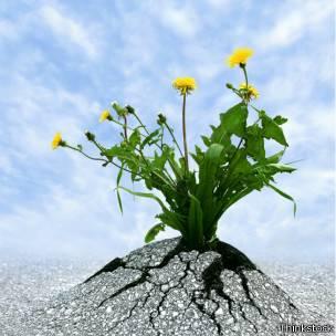 Unas flores que crecen en el asfalto