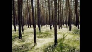 غابات براندنبرغ