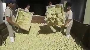 Pollitos sacrificados en Argentina