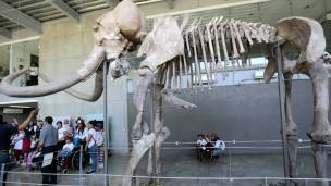 Esqueleto de un mamut