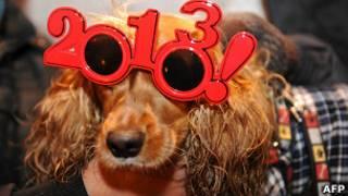 Perro celebrando el 2013 en Madrid