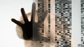 Autorradiograma de ADN. Foto de archivo