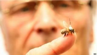 मधुमक्खी